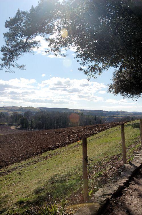 devon fields