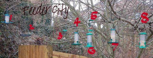 feeder city